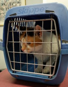 is it bad to keep a cat in a cage?